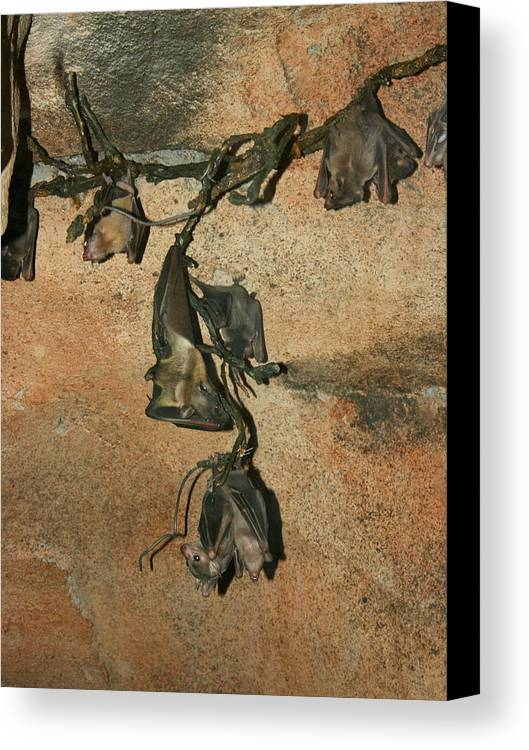 Animal Canvas Print featuring the photograph Hanging Out With My Buds by David Dunham