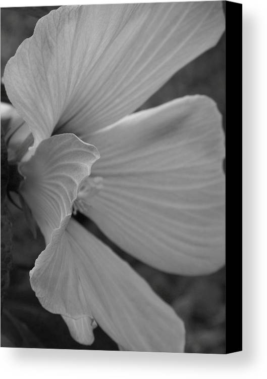 Hibiscus Canvas Print featuring the photograph Hibiscus In Detail by Barbara Norfleet
