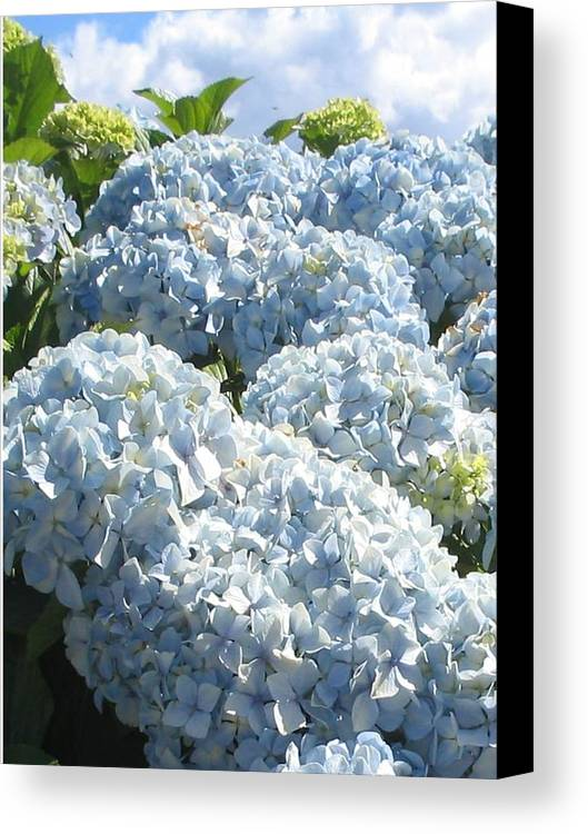 Blue Hydrangea Canvas Print featuring the photograph Hydrangeas by Valerie Josi