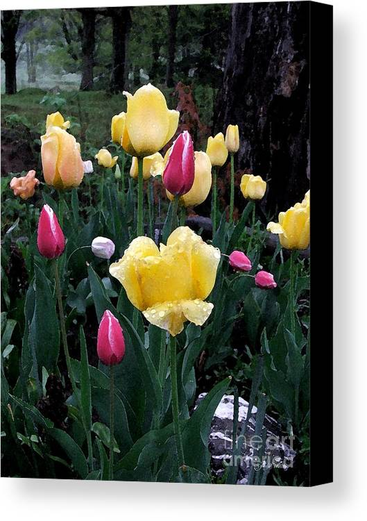Tulips Canvas Print featuring the photograph In The Garden by Judy Waller