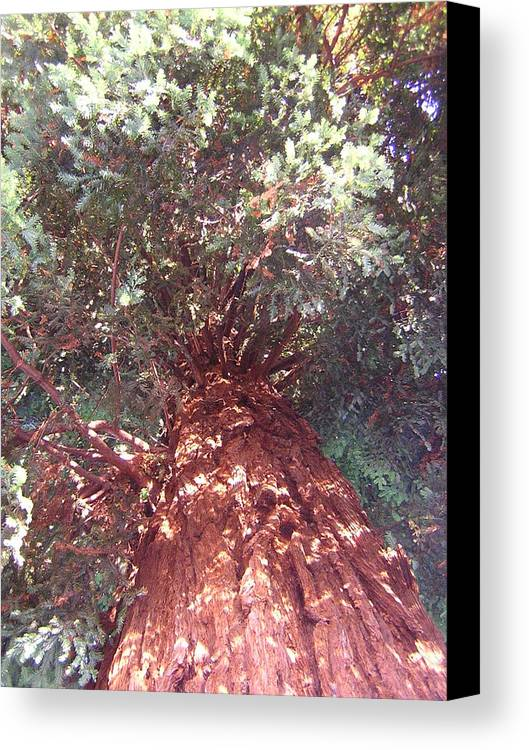 Tree Canvas Print featuring the photograph Keep Looking Up by Valerie Josi