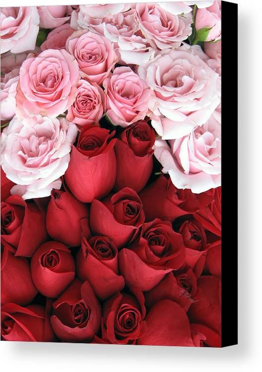 Flower Canvas Print featuring the photograph Kissing Cousins by Kat Dee