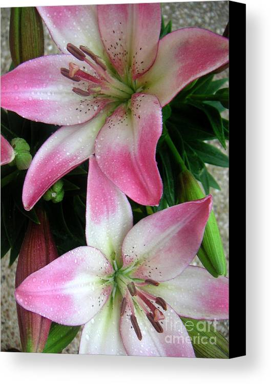 Nature Canvas Print featuring the photograph Lily Times Two by Lucyna A M Green
