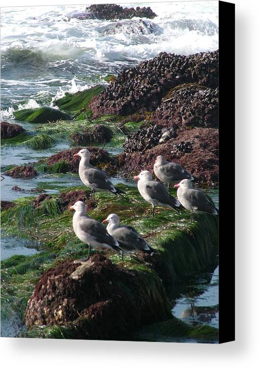 Nature Canvas Print featuring the photograph Meeting Of The Minds by John Loyd Rushing
