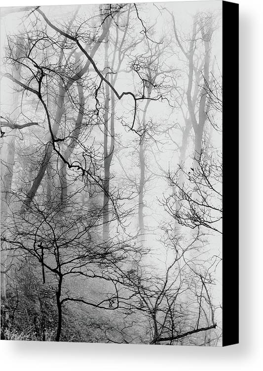 Canvas Print featuring the photograph Misty Woods, Whitley Mill by Iain Duncan
