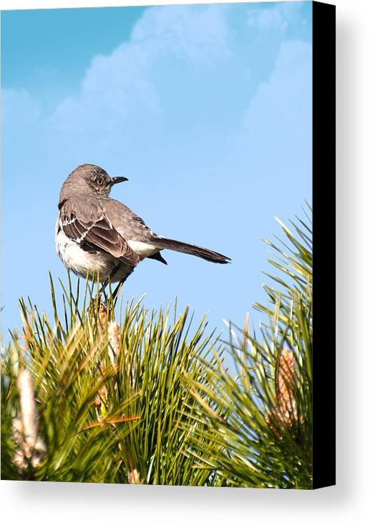 Canvas Print featuring the photograph Mockingbird 03 by Robert Hayes