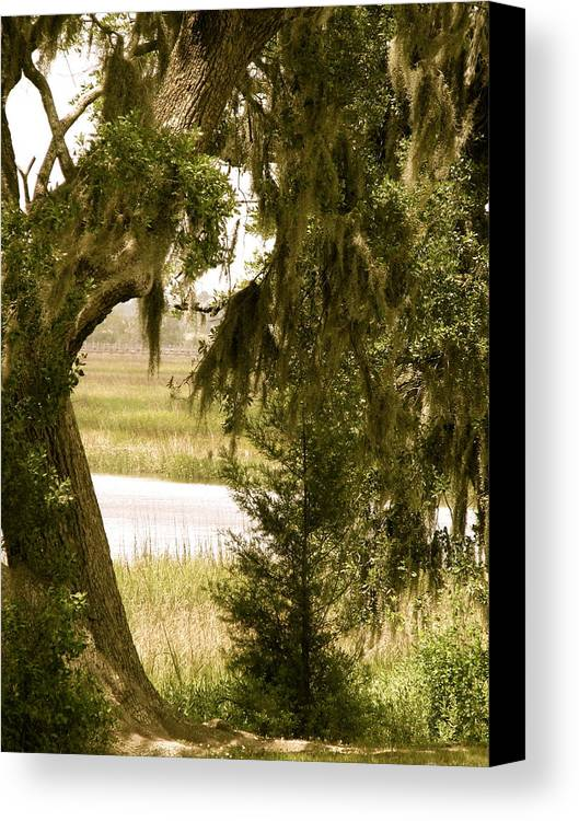 South Carolina Canvas Print featuring the photograph Moss On The Marsh by Staci-Jill Burnley
