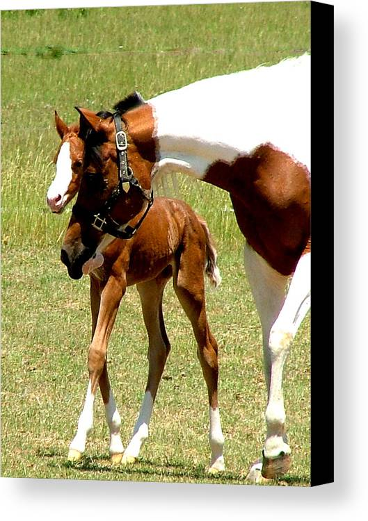 Horse Canvas Print featuring the photograph Mother And Newborn by Donna Thomas