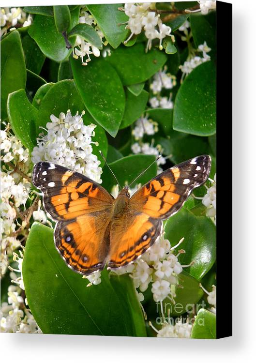 Nature Canvas Print featuring the photograph Nature In The Wild - On Golden Wings by Lucyna A M Green