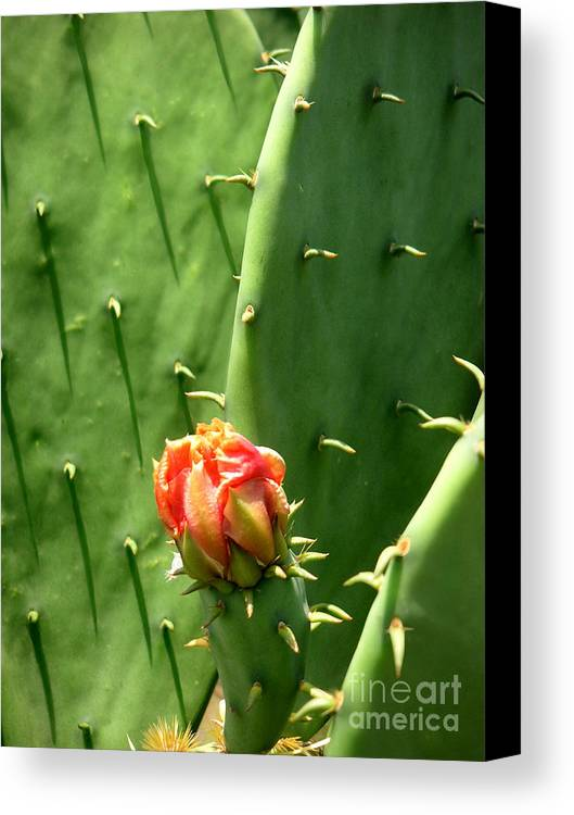 Nature Canvas Print featuring the photograph Nature In The Wild - Red Against Green by Lucyna A M Green