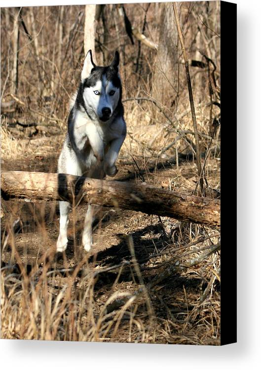 Animal Canvas Print featuring the photograph No Problem At All by David Dunham