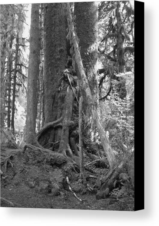 Rain Forest Canvas Print featuring the photograph Olympia Rain Forest by TL Randleman