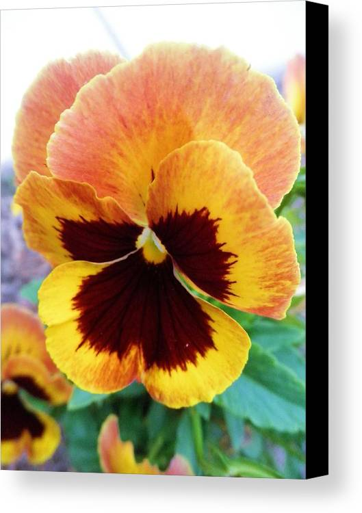 Flower Canvas Print featuring the photograph One Pretty Face by Jeanette Oberholtzer