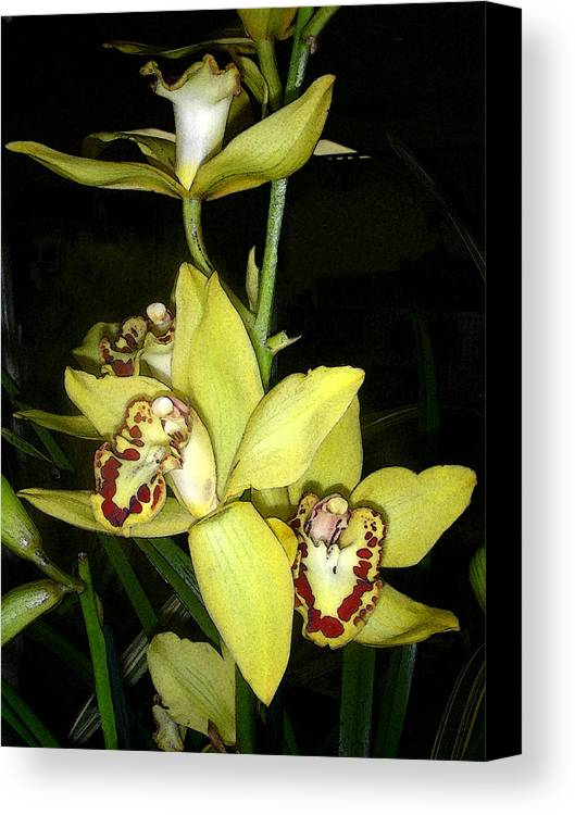 Flowers Canvas Print featuring the digital art Pastel Yellow And Wine Orchids by Deb JAZI Raulerson