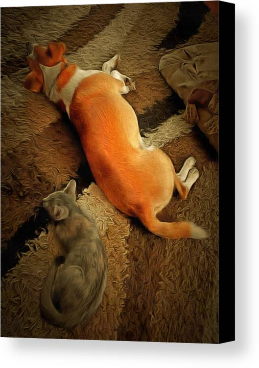 Barnie Canvas Print featuring the photograph Pawse Between Play by Dorothy Berry-Lound