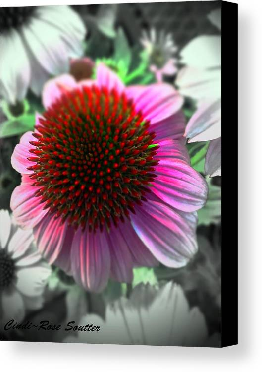 Flowers Canvas Print featuring the photograph Peace On Earth by Cindi Soutter