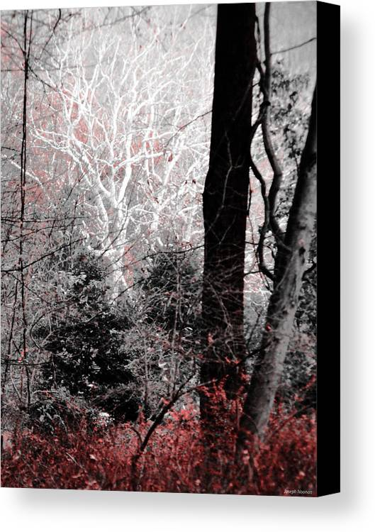 Trees Canvas Print featuring the photograph Phantasm In Wildwood by Joseph Noonan