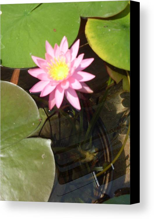 Pink Canvas Print featuring the photograph Pink And Yellow Lotus Flower by Warren Thompson