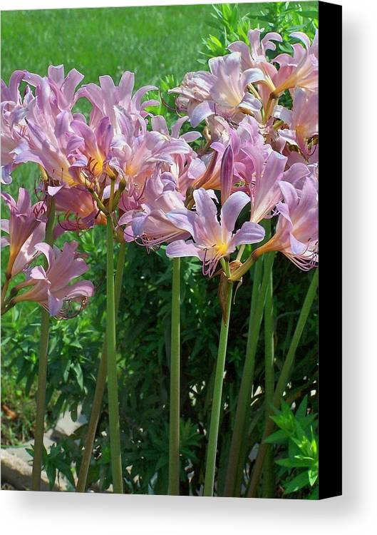 Pink Canvas Print featuring the photograph Pink Flowers by Vijay Sharon Govender