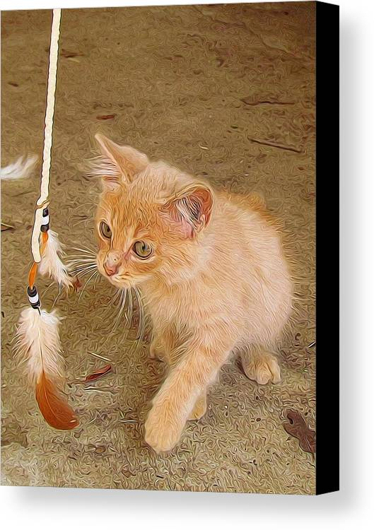 Cat Canvas Print featuring the photograph Play Time With Kitty by Shannon Story