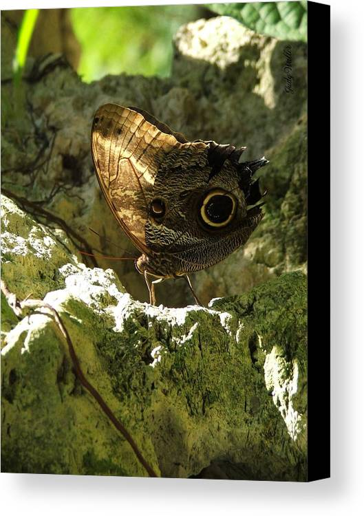 Butterfly Canvas Print featuring the photograph Posing In The Light by Judy Waller