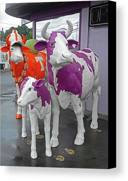 Bristol Canvas Print featuring the photograph Purple Cow 2 by Ron Kandt