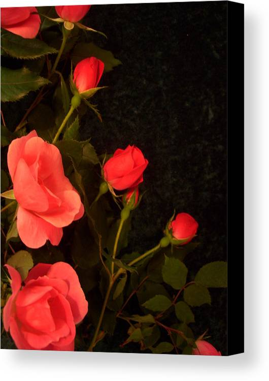 Red Roses Soddenly Appears. Canvas Print featuring the photograph red by Nereida Slesarchik Cedeno Wilcoxon