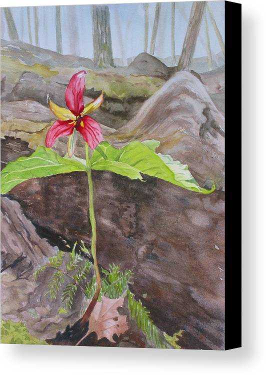 Red Trillium Canvas Print featuring the painting Red Trillium In The Spring by Debbie Homewood