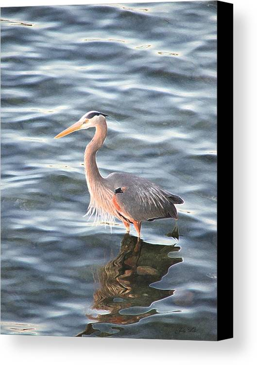 Bird Canvas Print featuring the photograph Reflections In The Water by Judy Waller
