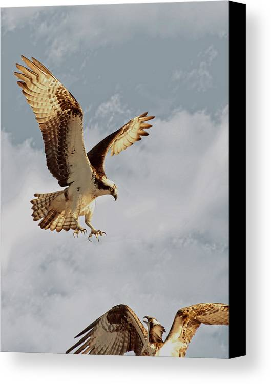 Canvas Print featuring the photograph Returning To The Nest 01 by Robert Hayes