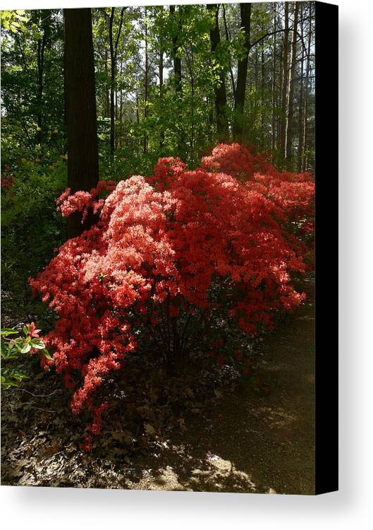 Nature Canvas Print featuring the photograph Rhododendron by Attila Balazs