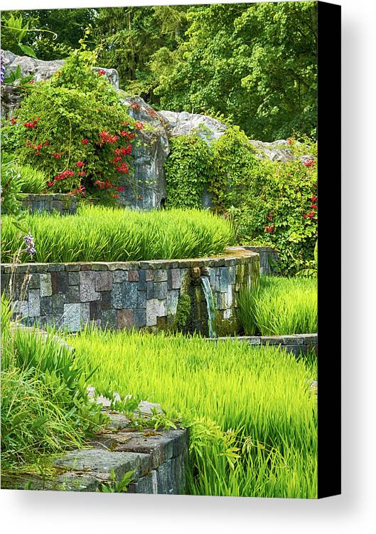 Rice Canvas Print featuring the photograph Rice Garden by Wim Lanclus