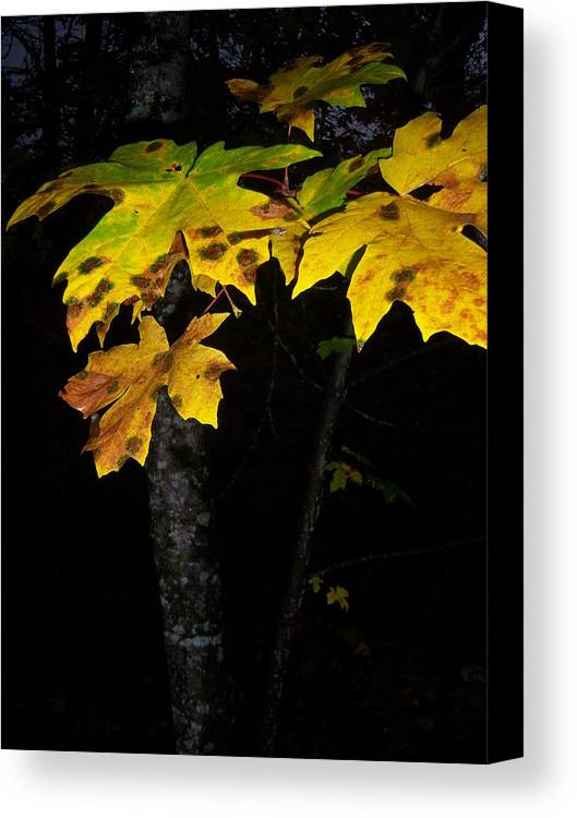 Autumn Canvas Print featuring the photograph Rings Of Green And Drown by Ken Day
