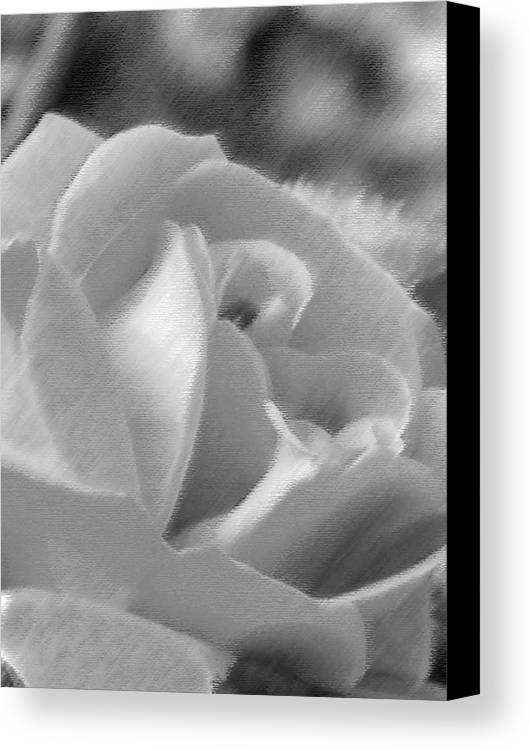 Flower Canvas Print featuring the photograph Rose by John Bradburn
