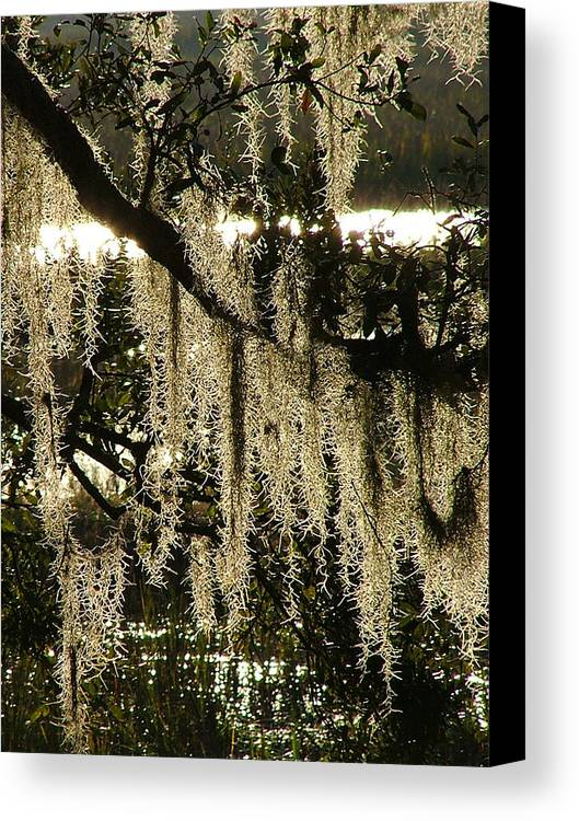 Marsh Canvas Print featuring the photograph Spanish Moss by Donna Thomas