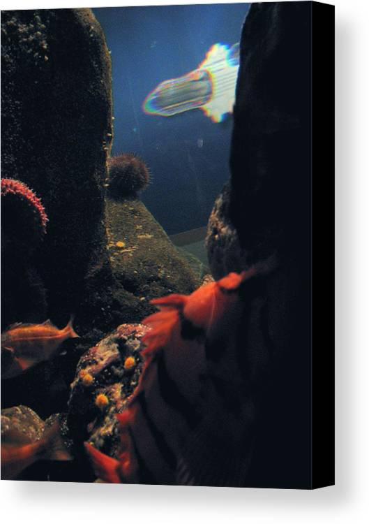 Fish Canvas Print featuring the photograph Squid And Fish by Jess Thorsen