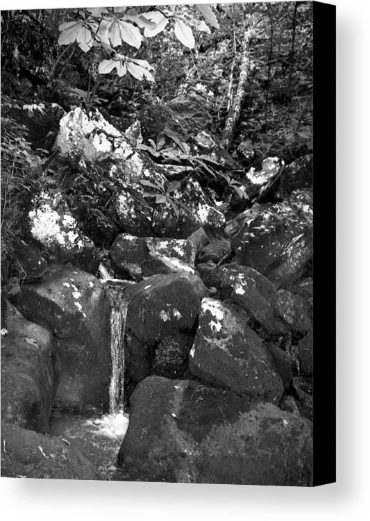 Canvas Print featuring the photograph Stream by Curtis J Neeley Jr
