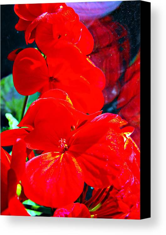 Pelargonium Canvas Print featuring the photograph Study In Red by Alexandra Cook