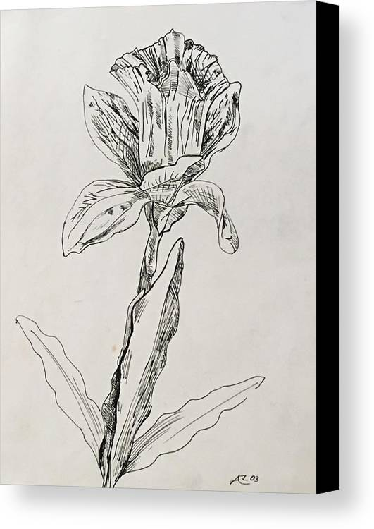 Canvas Print featuring the drawing Study Of Flower by Alejandro Lopez-Tasso