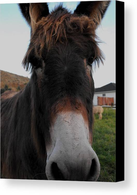 Animal Canvas Print featuring the photograph Such A Cute Face by Jan Tribe
