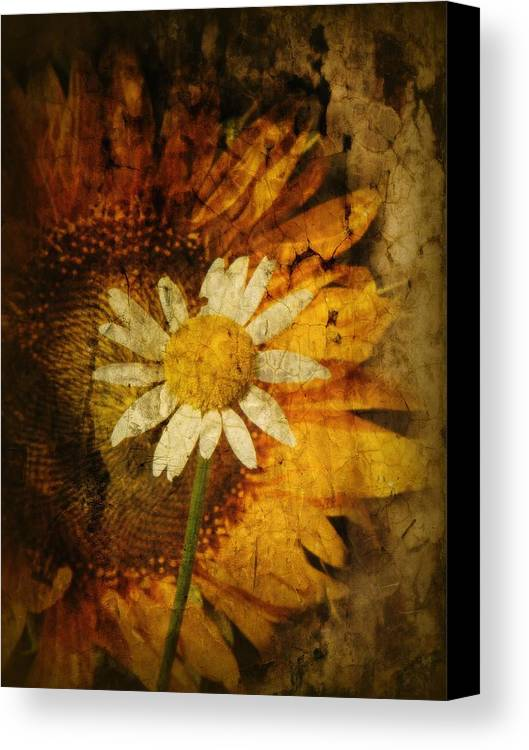 Texture Canvas Print featuring the photograph Sunny Antiqued by Tingy Wende