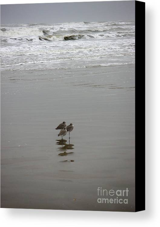 Nature Canvas Print featuring the photograph The Gulf In Shades Of Gray - Three Sleepy Heads by Lucyna A M Green