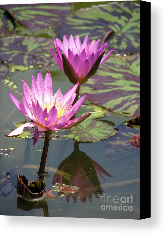Lillypad Canvas Print featuring the photograph The Pond by Amanda Barcon