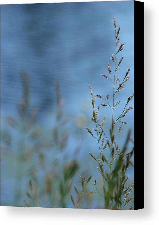 Grass Canvas Print featuring the photograph The River Behind by Tingy Wende