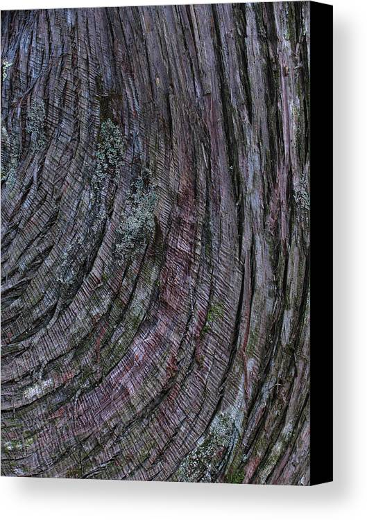 Tree Bark Canvas Print featuring the photograph Tree Bark by Juergen Roth