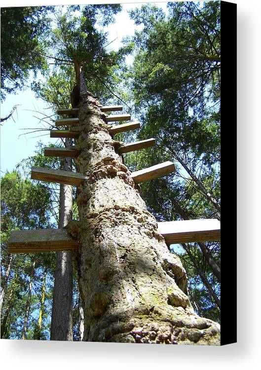 Ladder/ Tree Canvas Print featuring the photograph Tree Ladder by Gene Ritchhart