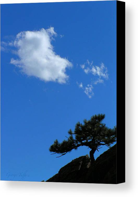 Tree Sky Clouds Colorado Zen Mount Sanitas Mountains Simple Rocky Mountains Canvas Print featuring the photograph Tree Sky Cloud by George Tuffy