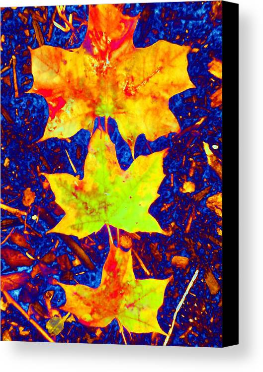 Maple Canvas Print featuring the photograph Trio by Beth Akerman
