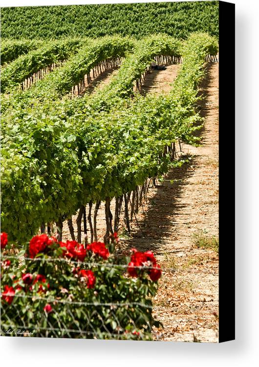 Vineyards Canvas Print featuring the photograph Vineyards In The Galilee 4 by Arik Baltinester