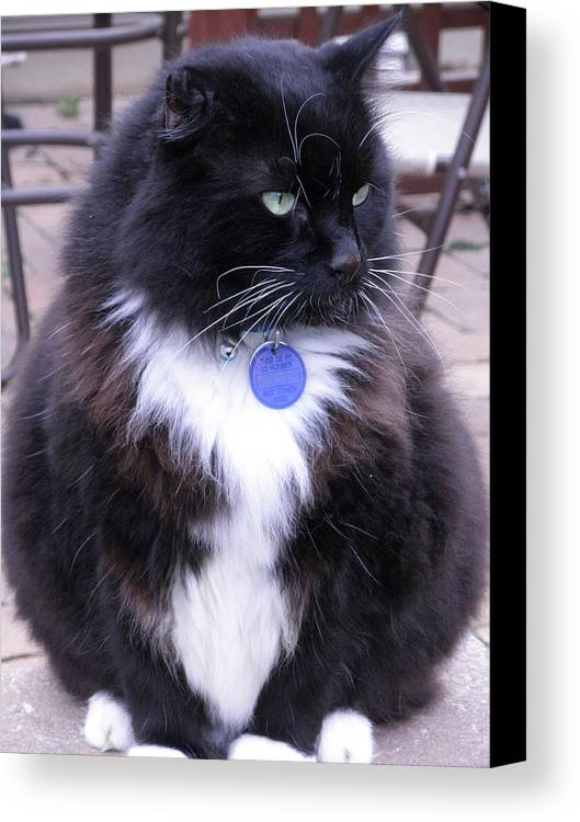 Cat Canvas Print featuring the photograph Watching For Mousie by Jeanette Oberholtzer